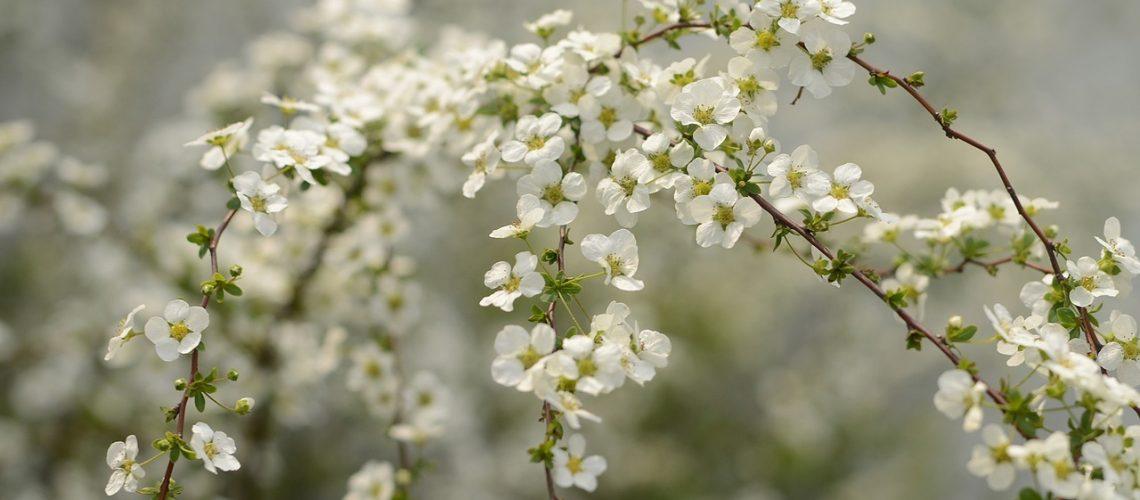 birds-flowers-2149275_1280